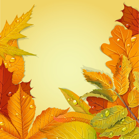 chokeberry: Yellow and red autumn leaves background