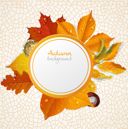 chokeberry: round autumn leaves banner