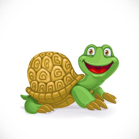 turtle isolated: Tortuga del beb� de la historieta aislado en el fondo blanco