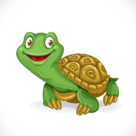turtle isolated: Peque�a tortuga linda de la historieta aislado en el fondo blanco Vectores