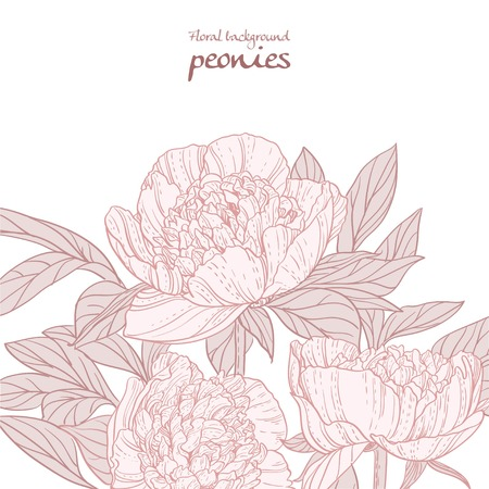 Beautiful peonies pink line art background Vector