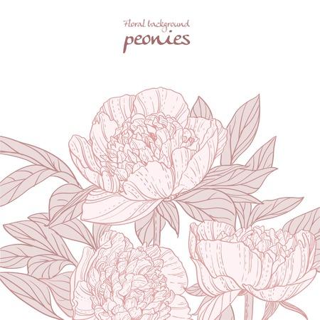 streckbilder: Vackra pioner rosa linje konstbakgrund Illustration