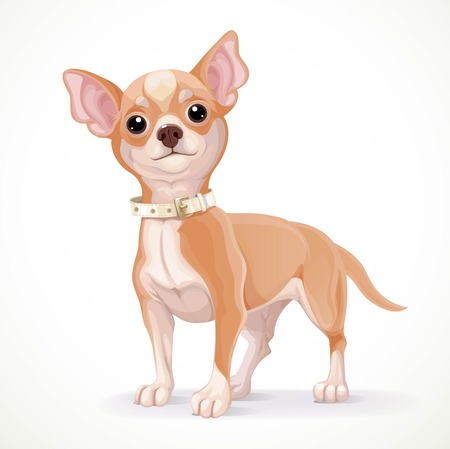 cartoon chihuahua: Cute little chihuahua dog vector illustration isolated on white background