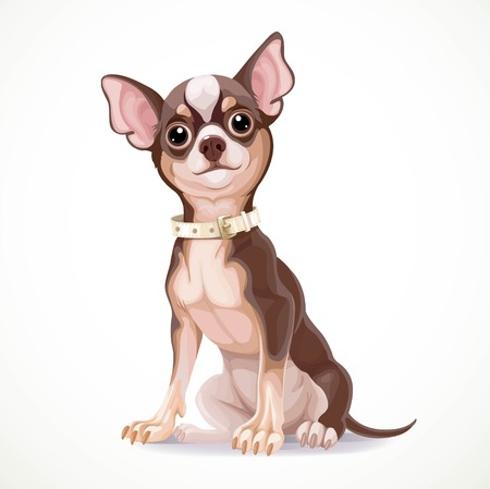 whelp: Cute little chihuahua dog wearing a collar vector illustration isolated on white background