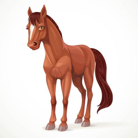 caballo: Hermoso caballo marr�n con una estrella en la frente aislado en el fondo blanco