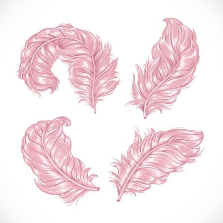 Las grandes rosados ??suaves plumas de avestruz exuberantes aislados sobre fondo blanco