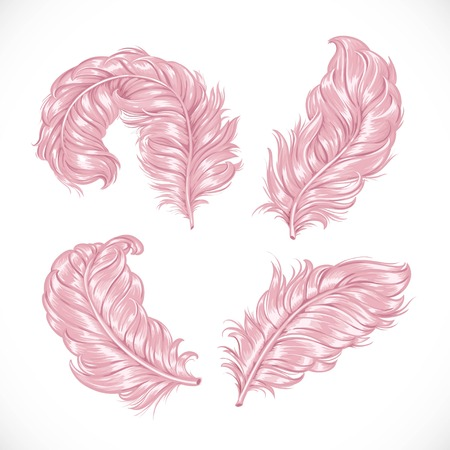 Large pink fluffy lush ostrich feathers isolated on white background Illustration