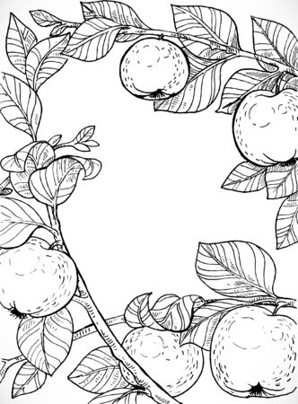 insertion: Black and white drawing of branches with apples and leaves Illustration