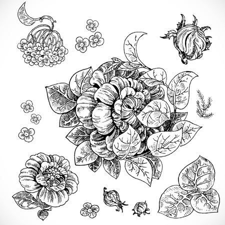 advertising logo: Black and white drawing fantasy flowers and leaves graphic elements set for design
