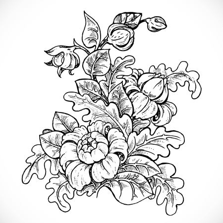 buds: Black and white drawing fantasy flower on white background Illustration