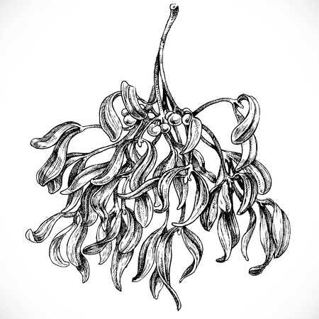Black and white graphic drawing of mistletoe Ilustração
