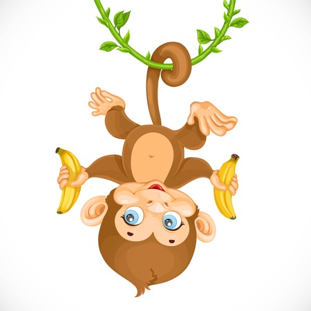 chango bebe: Cute baby monkey with banana hanging on the liana isolated on a white background