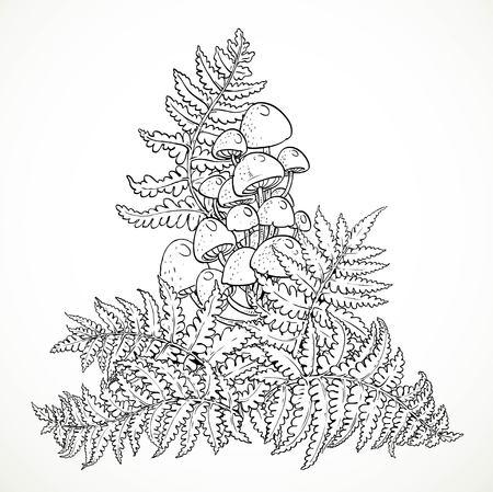 hongo: Helechos y hongos zampullines gráficos en blanco y negro aislado en el fondo blanco Vectores
