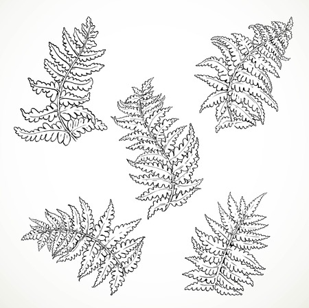 separately: Fern leaves separately black and white graphics isolated on white background