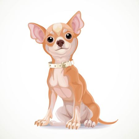 Cute little chihuahua dog wearing a collar sit on white illustration isolated on white background Illustration