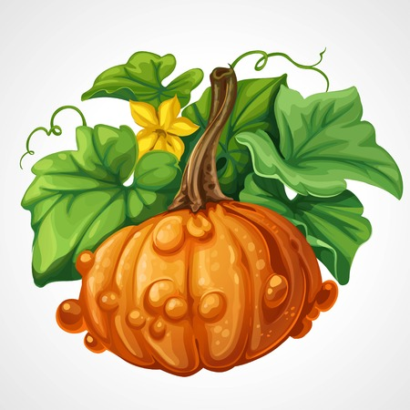 beautifu: Beautifu orange Halloween pumpkin with green leaves isolated on a white background Illustration