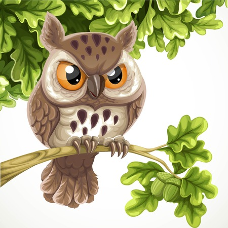 Cute cartoon owl sitting on a oak branch under a crone of leaves isolated on a white background