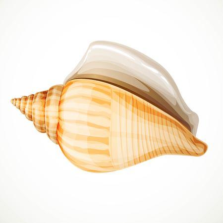 Realistic seashell isolated on white background
