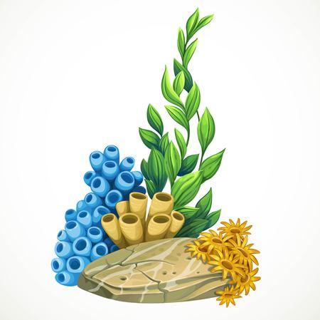 해양 조류, 스폰지와 흰색 배경에 고립 된 바위 바다 생활 개체에서 성장하는 말미 잘