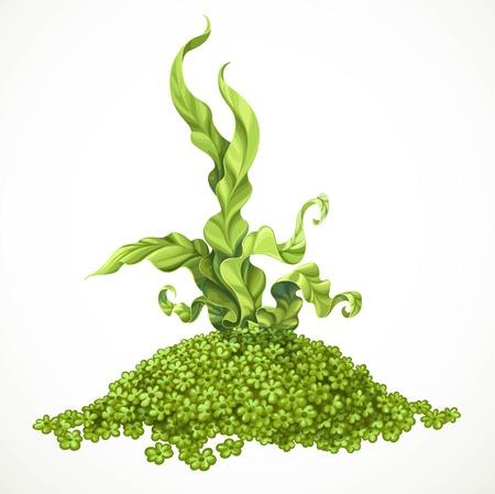 Morskie zielone algi na wzgórzu aktinium dennego życia przedmiot odizolowywający na białym tle Ilustracje wektorowe