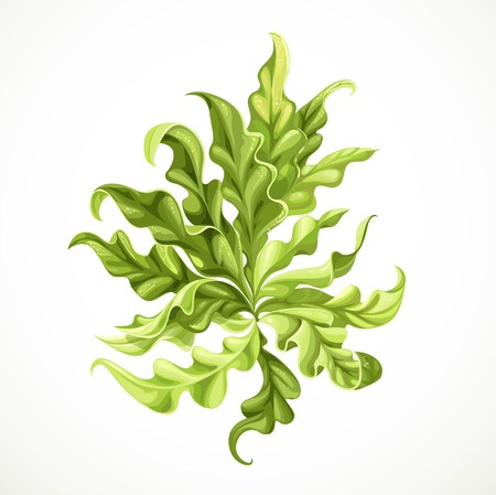 Marine green algae object 2  isolated on white background  イラスト・ベクター素材