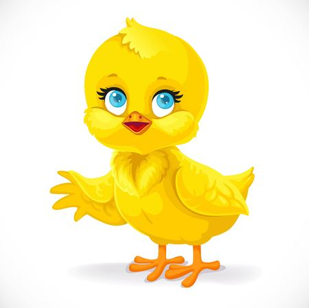 Cute baby chick shows a side isolated on a white background