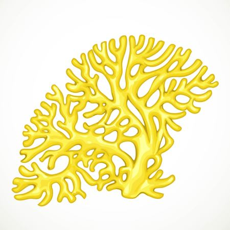 Yellow corals marine life isolated on white background