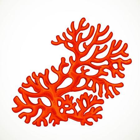 Rode asymmetrische koralen mariene levensobject geïsoleerd op een witte achtergrond