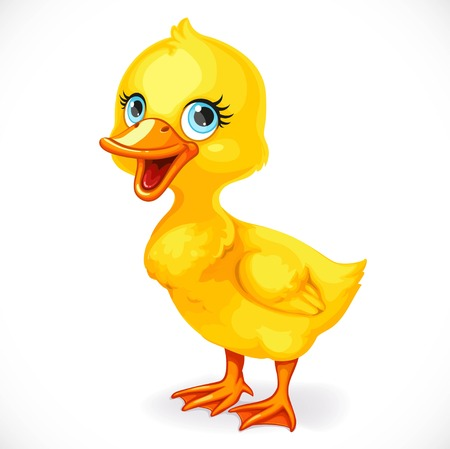Cute little toeded yellow duckling isolated on white background