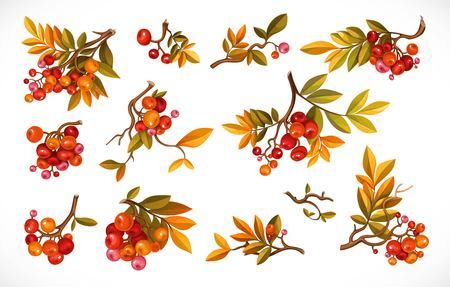 白い背景に孤立した葉と赤い果実を持つ枝のセット