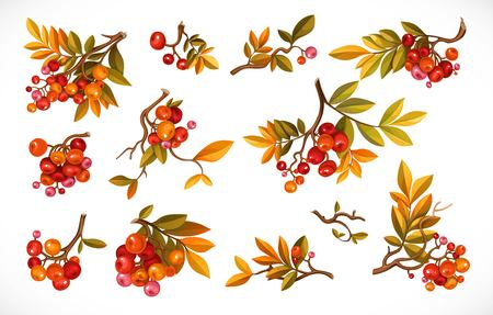Set of branches with leaves and red berries isolated on white background