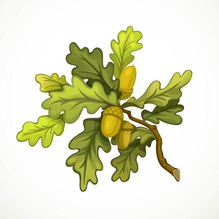 rama de roble con hojas verdes y bellotas de objeto aislados sobre fondo blanco