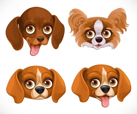 Cute dog muzzle beagle breed, dachshund, butterfly papillon isolated on white background