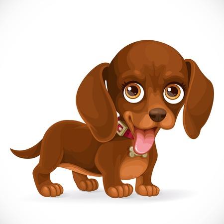 Kleine schattige bruine dachshund puppy geïsoleerd op een witte achtergrond