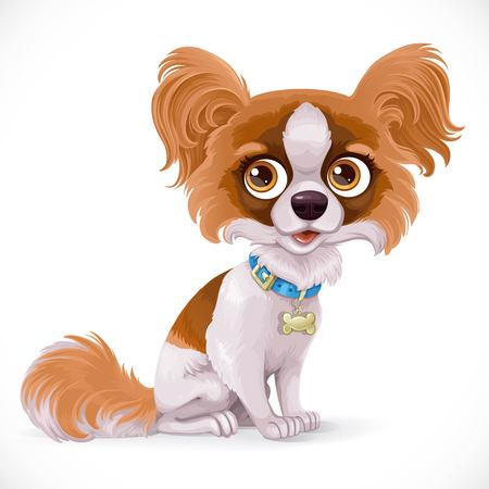 Cute cartoon papillon butterfly little puppy sit on white floor isolated on a white background