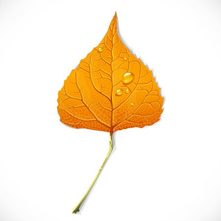 Yellow autumn leaf of a birch isolated on a white background Illustration