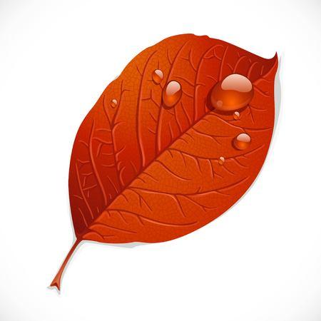 白い背景に孤立した瓦礫の滴を持つ赤い秋の葉  イラスト・ベクター素材