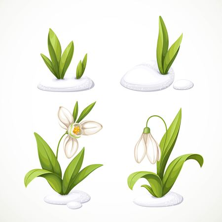 Snowdrop and flower in sequence, cartoon illustration. Vectores