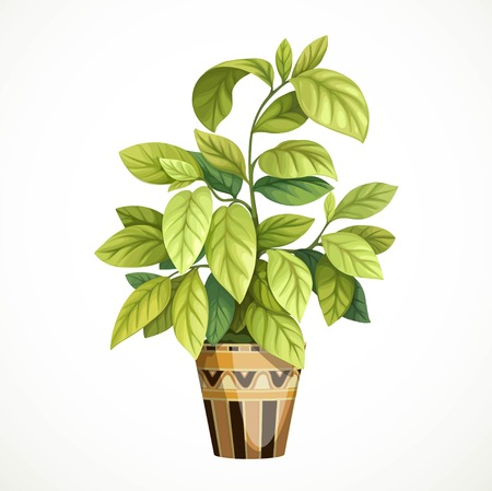 Decorative tropical tree with large leaves in a pot painted ethnic geometric ornaments isolated on a white background Ilustração