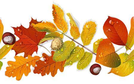 Bordillo transparente de hojas de otoño rojas y amarillas y castaño aislado sobre fondo blanco. Ilustración de vector