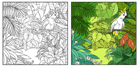 Wild jungle with cockatoo parrot perched on branch color and black contour line drawing for coloring on a white background Illustration