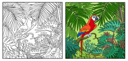 Wild jungle with parrot of macaw sit on branch color and black contour line drawing for coloring on a white background