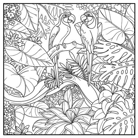 Wild jungle with two parrots of macaw sit on branch over  forest lake black contour line drawing for coloring on a white background Illustration