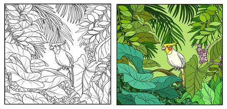 Wild jungle with corella parrot perched on branch color and black contour line drawing for coloring on a white background. Illustration