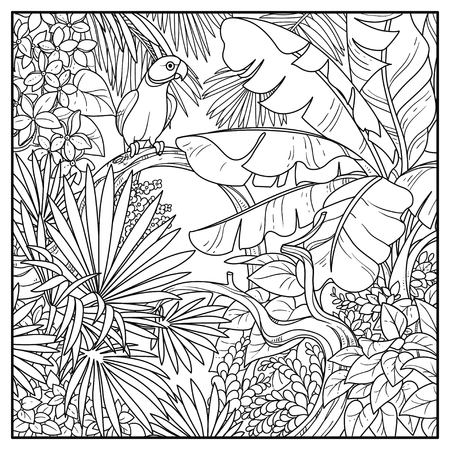 Wild jungle with Indian ringed parrot perched on branch black contour line drawing for coloring on a white background. Illustration