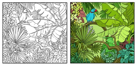 Wild jungle with Indian ringed parrot perched on branch color and black contour line drawing for coloring on a white background.