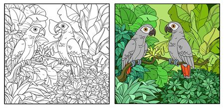 Wild jungle with two parakeets red-tailed Jaco perched on branch color and black contour line drawing for coloring on a white background