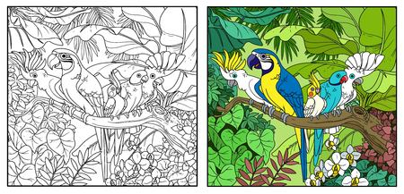 Cute parrots of different breeds sits on branch in wild jungle color and black contour line drawing for coloring on a white background