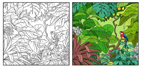 Wild jungle with rosella parrot on branch color and black contour line drawing for coloring on a white background