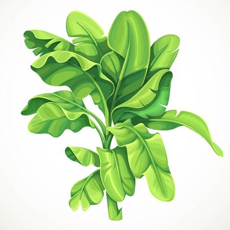 Palmier banane avec illustration vectorielle de grandes feuilles